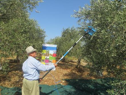 USAID-Funded Olive Oil Mechanical Harvesting Program Draws to a