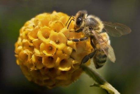 Report: Mite Helps Virus Destroy Beehives — Naharnet